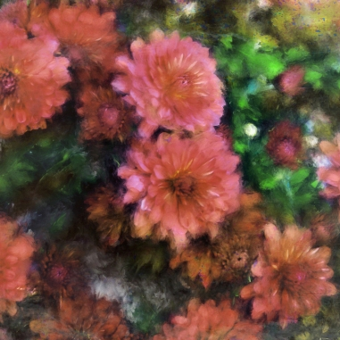 Bronze and Pink Mums