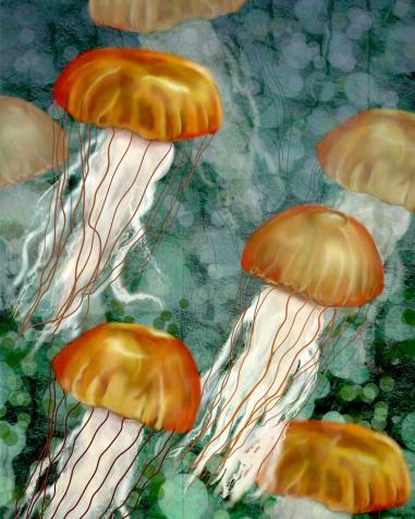 Golden Jellyfish TN