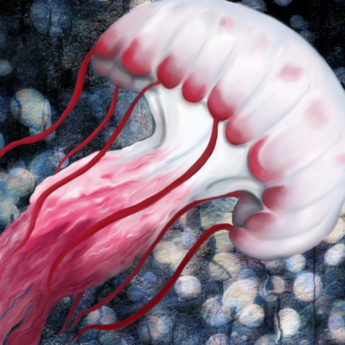 Red and White Jellyfish