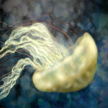 Golden Light Jellyfish
