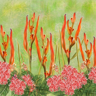 Malaysian Orange Flower Border Print TN